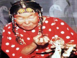 shaman-amanita-sami-samoyed-soma